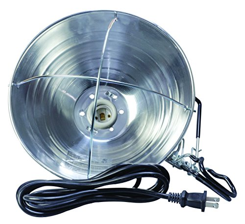 Bulbrite 250br40h 250w Heat Lamp Br40 Reflector Light Clear Leisuretimery